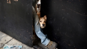 In Photos: Mexico City Dog Shelter Perseveres After Quake