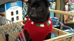 Americans To Spend 1.5 Times More on Christmas For Pets
