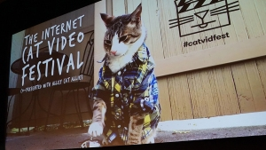 CatVidFest Gets an Encore at AFI Theatre