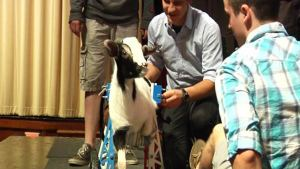 Va. Students Make Wheelchair for Two-Legged Goat