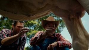 'Tonight Show': Blake Shelton Teaches Jimmy How to Milk a Cow