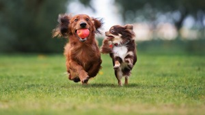 DC to Spend $2.1M to Buy, Preserve Neighborhood Dog Park