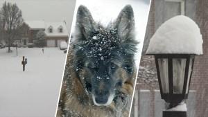 Photos: DC Area Gets a Snow Day