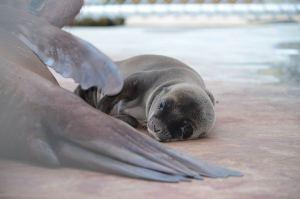 PHOTOS: Sea Lion Pup Born at National Zoo