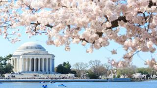 Sick of Snow? Cherry Blossom Festival Dates Have Been Announced