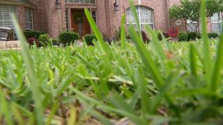 Montgomery County Delays Decision on Lawn Pesticides Ban