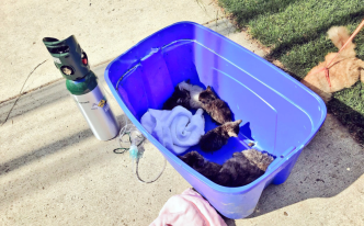 More Than 50 Cats Found After House Fire in Maryland