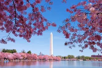 Cherry Blossom Peak Blooming Dates Announced