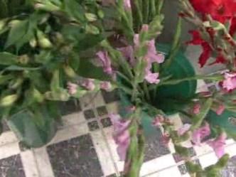 Monkeysee Monkey Do: Tips for Choosing Mother's Day Flowers