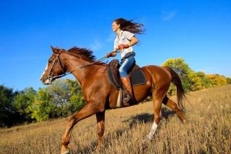 Horse Whispering 101 in Virginia
