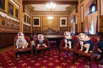 Bulldogs Meet for Cutest Summit Ever