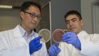Parasites May Help Stomach & Bowel Diseases