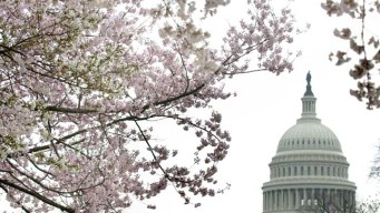 Will a Federal Shutdown Shut Down the Cherry Blossom Parade?