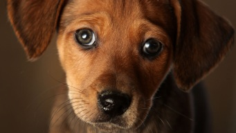 #ClearTheShelters: Join the Social Conversation