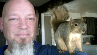 Crime-Fighting Pet Squirrel Returns to the Wild