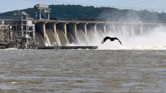 Experts Warn of 'Dead Zone' in Chesapeake Bay From Pollution