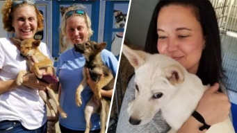 Dogs Saved From Korean Meat Farm Up for Adoption in Virginia