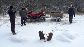 2 Moose Found Frozen Mid-Fight Near Remote Alaska Village