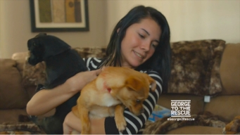 Full Episode: A Home for Rescue Dogs