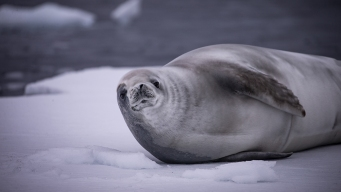 Scientists Blame Climate Change for Deadly Sea Mammal Virus