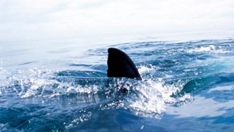 Live Shark Found in Florida Condo Swimming Pool