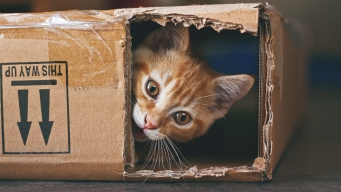 Cat Sent by Mail Survives 8 Days in Box