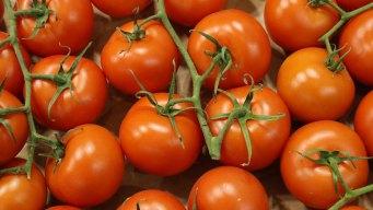 Mexico Says Tariffs Will Send Tomato Prices Soaring