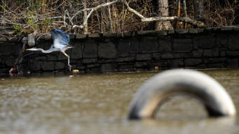New Signs to Warn of Maryland's Contaminated Fishing Spots