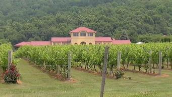 How Weather Affects Virginia Wine