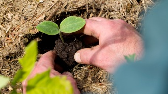 Washington Could Be First State to Legalize Human Composting