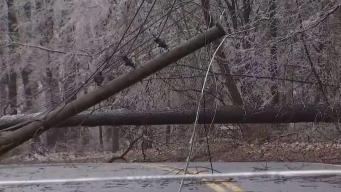Icy Conditions Lead to Downed Trees, Power Lines
