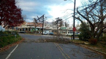 Strong Winds Bring Down Trees, Cause Power Outages