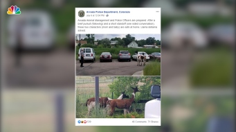 Colorado Police Have Standoff With Runaway Llamas, Joke on Social Media