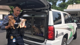 17 Dogs, Bearded Dragon Seized From Loudoun County Home