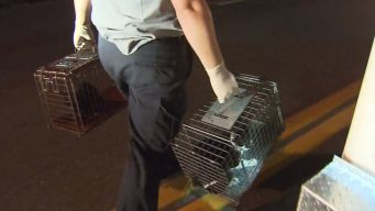 Dozens of Cats Found with Dead Body
