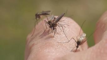 Research Team Targets Diseases With Mosquito Birth Control