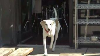 Regulation Under Review After DC Cracks Down on Dogs at Bars