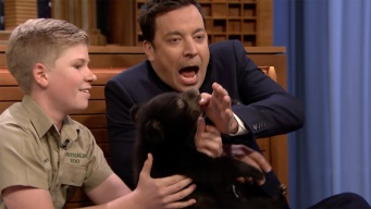 Steve Irwin's Son Brings Baby Bears to Play With Fallon