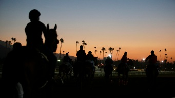Santa Anita Race Track Closed Indefinitely After 21st Horse Death