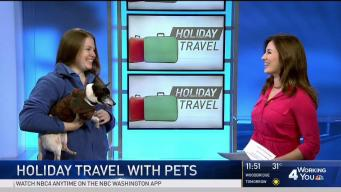 Quick Tips for Holiday Travel With Pets