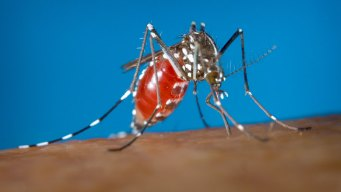 'Natural' Mosquito Repellents Don't Last: Consumer Reports