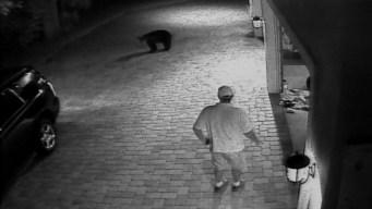 Bear Surprises Florida Man