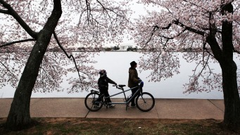 Events on Final Day of Blossom Festival