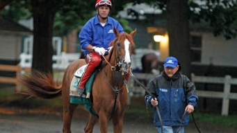 "California Chrome's Jockey ""Super Ready"" for Belmont Race"
