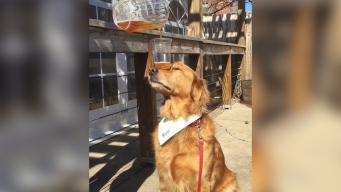 The Internet Can't Get Enough of This Dog's Balancing Act