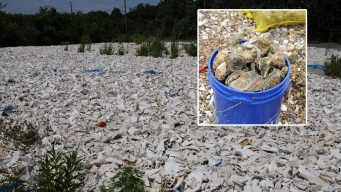 5K Toilets to Get New Life as NYC Oyster Beds