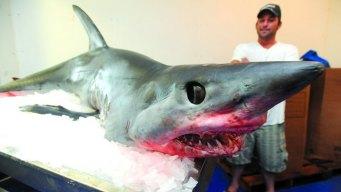 Jumping Shark Lands On Boat in Texas