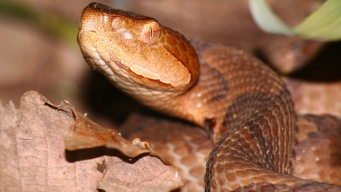 Irene Brings Snakes Out in Montgomery County?