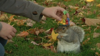 Student Gains Attention for Putting Hats on Squirrels