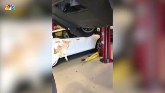Furry Surprise Behind the Bumper: Kitten Found in Tesla